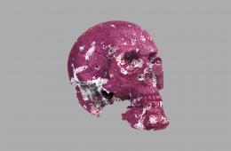 Skull, Archival pigment print back-mounted to plexiglass, 2016