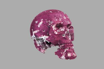 Skull, Archival pigment print back-mounted to plexiglass, 2016
